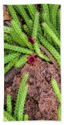Cactus Splendor Bath Towel