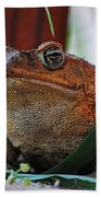 Cain Toad Bath Towel