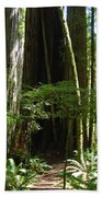 California Redwood Trees Forest Art Bath Towel