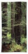 California Redwoods Bath Towel
