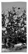 California Roadside Tree - Black And White Bath Towel