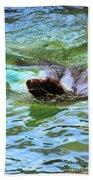 California Sea Lion-1611 Hand Towel