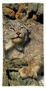 Canadian Lynx On Lichen-covered Cliff Endangered Species Bath Towel