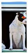 Canine Comedians Bath Towel