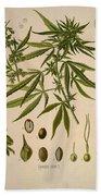 Cannabis Sativa  Bath Towel
