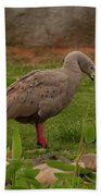 Cape Barren Geese Facing Right Bath Towel