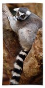 Captive Ring Tailed Lemur Perched In A Stone Tree Bath Towel