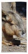 Capybara Resting In The Warm Sunlight Bath Towel