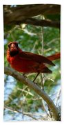 Cardinal Bath Towel