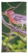 Cardinal Bird In The Wild In South Carolina Bath Towel