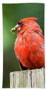 Cardinal Bath Towel
