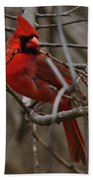 Cardinal In Spring Bath Towel