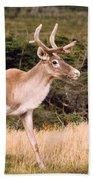 Caribou Hand Towel