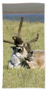 Caribou Rest Bath Towel