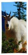 Cascade Range Mountain Goat Bath Towel