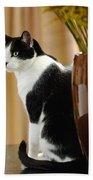 Cat Contimplation Bath Towel