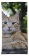 Cat Volterra Italy Bath Towel