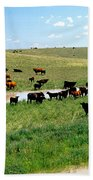Cattle Graze On Reclaimed Land Bath Towel