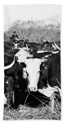 Cattle: Longhorns Bath Towel