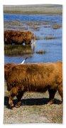 Cattle Scottish Highlanders, Zuid Kennemerland, Netherlands Bath Towel