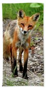 Cautious But Curious Red Fox Portrait Bath Towel