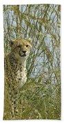 Cheetah Cub In Grass Bath Towel