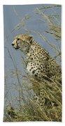 Cheetah Lookout Bath Towel