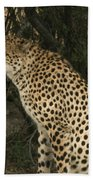 Cheetah Watching Bath Towel