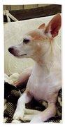 Chihuahua Chiqui Portrait 3 Bath Towel