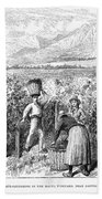 Chile: Wine Harvest, 1889 Bath Towel
