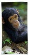 Chimpanzee Pan Troglodytes Baby Leaning Bath Towel