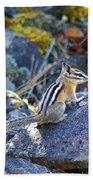 Chipmunk On The Rocks Bath Towel