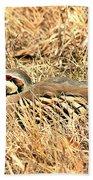 Chuckar Bird Hiding In Grass Bath Towel