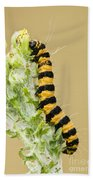 Cinnabar Moth Caterpillar Bath Towel