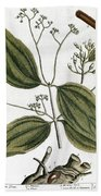 Cinnamon Tree, 1735 Bath Towel