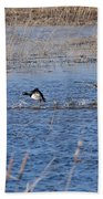 Cleared For Takeoff-ring-necked Ducks  Bath Towel