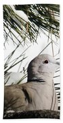 Close Up African Collared Dove Bath Towel
