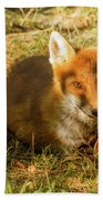 Close-up Of A Fox Resting In A Park Hand Towel