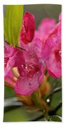 Close-up Of Pink Horatio Flowers Bath Towel