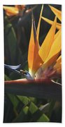 Close Up Photo Of A Bee On A Bird Of Paradise Flower  Bath Towel