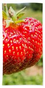 Close Up Shot Strawberry With Planting Strawberry Background Bath Towel by Alex Grichenko