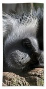 Closeup Of Black And White Angolian Primate Sleeping On Log Raft Bath Towel