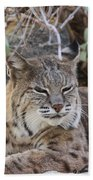 Closeup Of Bobcat Bath Towel