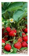 Closeup Of Fresh Organic Strawberries Growing On The Vine Bath Towel