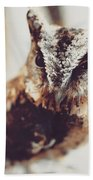 Closeup Portrait Of A Young Owl Looking At The Camera Bath Towel