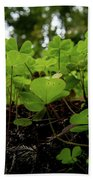 Clover In Montgomery Woods State Natural Reserve Hand Towel