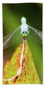Clown Face Dragonfly Hand Towel