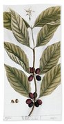 Coffee Plant, 1735 Bath Towel