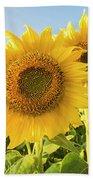 Colby Farms Sunflower Field Closeup Bath Towel