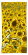 Colby Farms Sunflower Field Newbury Ma Bath Towel